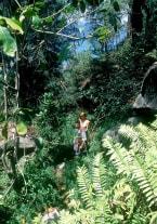 Ania and the Pleasure Island - thumb 1